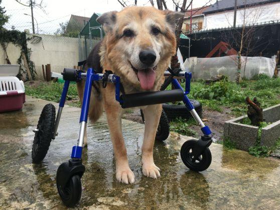 Moumou chariot 4 m