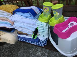 Merci à Gwenn et à sa maman qui sont venues nous voir avec plein de cadeaux pour nos matous !