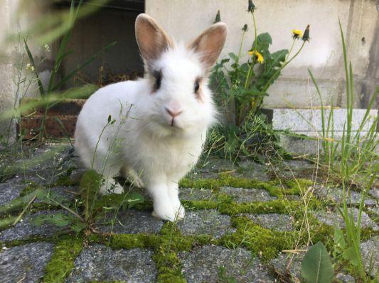 Sauvée de la négligence par une connaissance d'Animaux Séniors, Mia a été stérilisée, soignée et adoptée avec un copain lapinou !