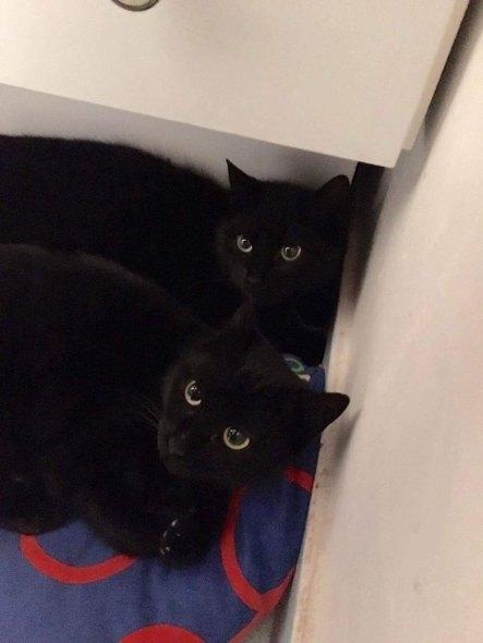 Deux petites boulettes noires qui se rajoutent aux plus de 70 chats stérilisés par l'association. Ici, avec l'aide des résidents où vivaient les chats errants.