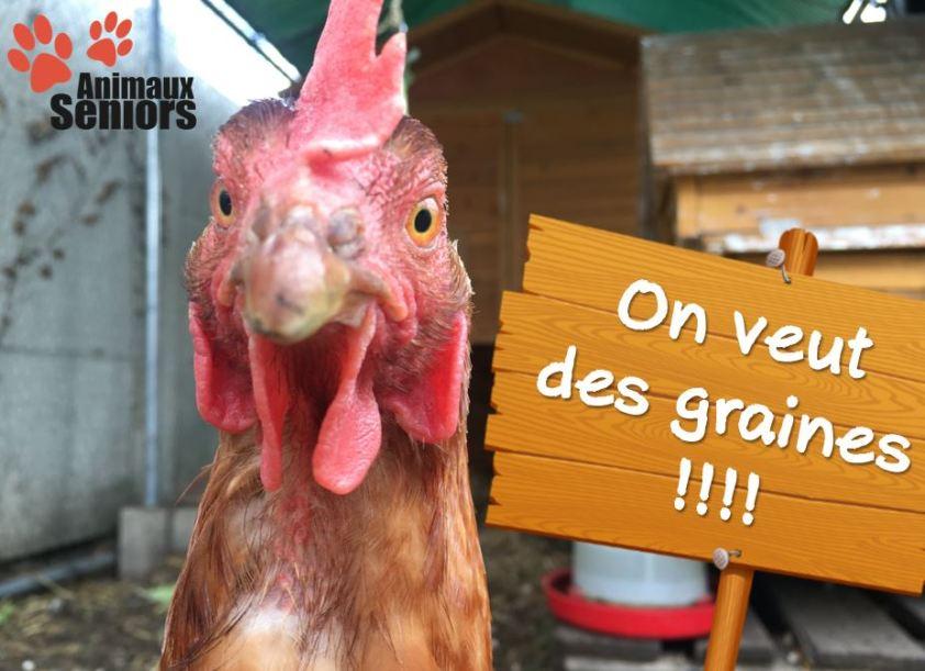 Appel au dons de graines pour les poules
