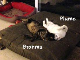 Très craintifs envers les humains ils adorent les copains chats ! Surtout, ils s'adorent ❤