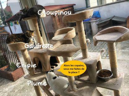 Tous ensemble ils vivent une vie paisible et chacun y trouve sa place. Plume adore cohabiter avec d'autres chats.