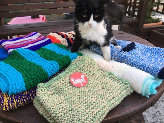 Notre doyenne Poupette (20 ans) est fan de ces petites couvertures faites main, super douces et moelleuses... parfaites pour les vieux os ! Merci Anne-Marie ❤