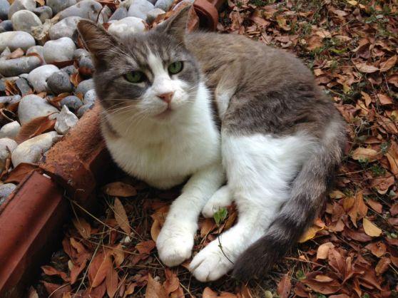 Bebelle est une mamie de 15 ans. Mais détrompez-vous, ce n'est pas une mamie mémère ! Bebelle est en pleine forme et adore se gambader dans le jardin. Elle a perdu sa maîtresse, une dame âgée, et attend encore sa famille pour une retraite heureuse.